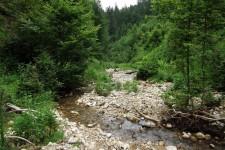 Habitat des Alpen-Perlmutterfalters (Boloria thore) auf der Adelegg