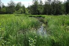Entwicklungsgewässer der FFH-Art (Anhänge II + IV) Große Moosjungfer (Leucorrhinia pectoralis)