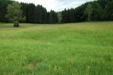 Charakteristisches Habitat in Oberschwaben, eine magere und kurzrasige Streuwiese
