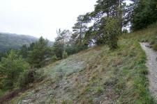 Habitat im Tauberland: Steiler und lückiger Trockenrasen