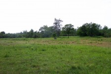 Habitat am südlichen Oberrhein: Grißheimer Trockenaue