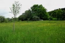 Strukturreiches, extensiv genutztes Grünland; Lebensraum der Äskulapnatter