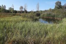 Charakteristisches Habitat der Art in Oberschwaben, ein Torfstichgewässer