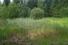 Habitat im Albvorland; vegetationsreiches und gut besonntes Kleingewässer