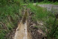 Temporär wasserführender Graben als Entwicklungsgewässer