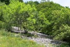 Weiteres Habitat, ein südexponierter Steppenheidewald am nördlichen Albtrauf