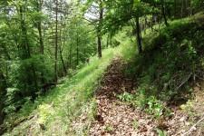 Habitat des Elegans-Widderchens am nördlichen Albtrauf bei Bad Urach