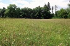 Habitat auf der Schwäbischen Alb, ein großflächiger Einmähder