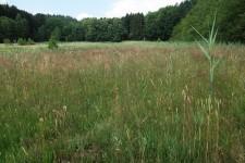 Habitat in Oberschwaben, eine lückige Streuwiese