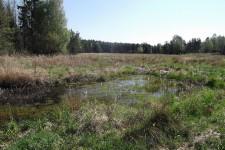 Völlig gehölzfreies Reproduktionsgewässer des Laubfroschs im Glemswald.