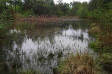Auch Waldgewässer können bei ausreichender Besonnung besiedelt werden.