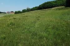 Habitat der Sumpfgrille, ein Hangquellmoor