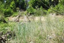 Natürliches Habitat der Sumpfgrille - Rutschhang an der Argen