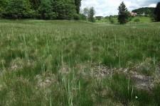 Lückige Vegetationsstruktur und Quellaustritte