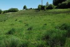 Extensiv genutzte Rinderweide mit Quellaustritten als Habitat