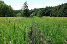 Weiterer Lebensraum der Zweigestreiften Quelljungfer in Oberschwaben