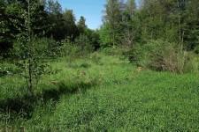 Weitere besiedelte Freifläche im selben Waldgebiet